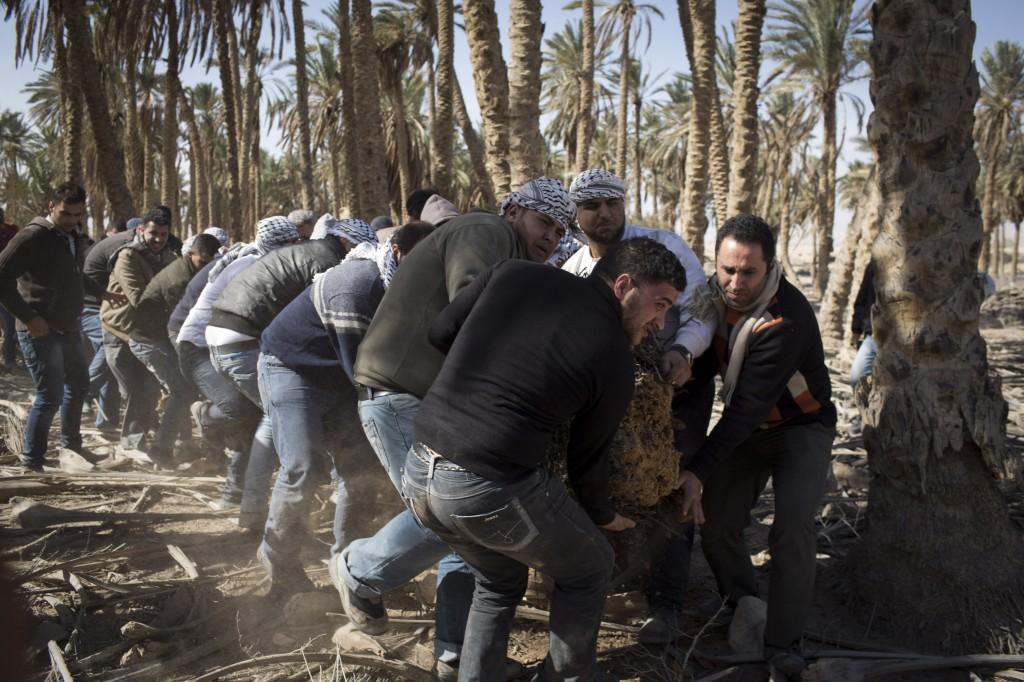 Des militants palestiniens travaillent pour nettoyer un espace à Ein Hijleh, village de protestation dans la vallée du Jourdain, en Cisjordanie, le 31 janvier 2014. Plus de 300 Palestiniens participent à l'action, qui fait partie de la campagne Melh Al-Ard (Le sel de la terre), contre le projet israélien d'annexation de la vallée du Jourdain, débattu pendant les négociations en cours entre les autorités palestiniennes et Israël, coordonnées par John Kerry.