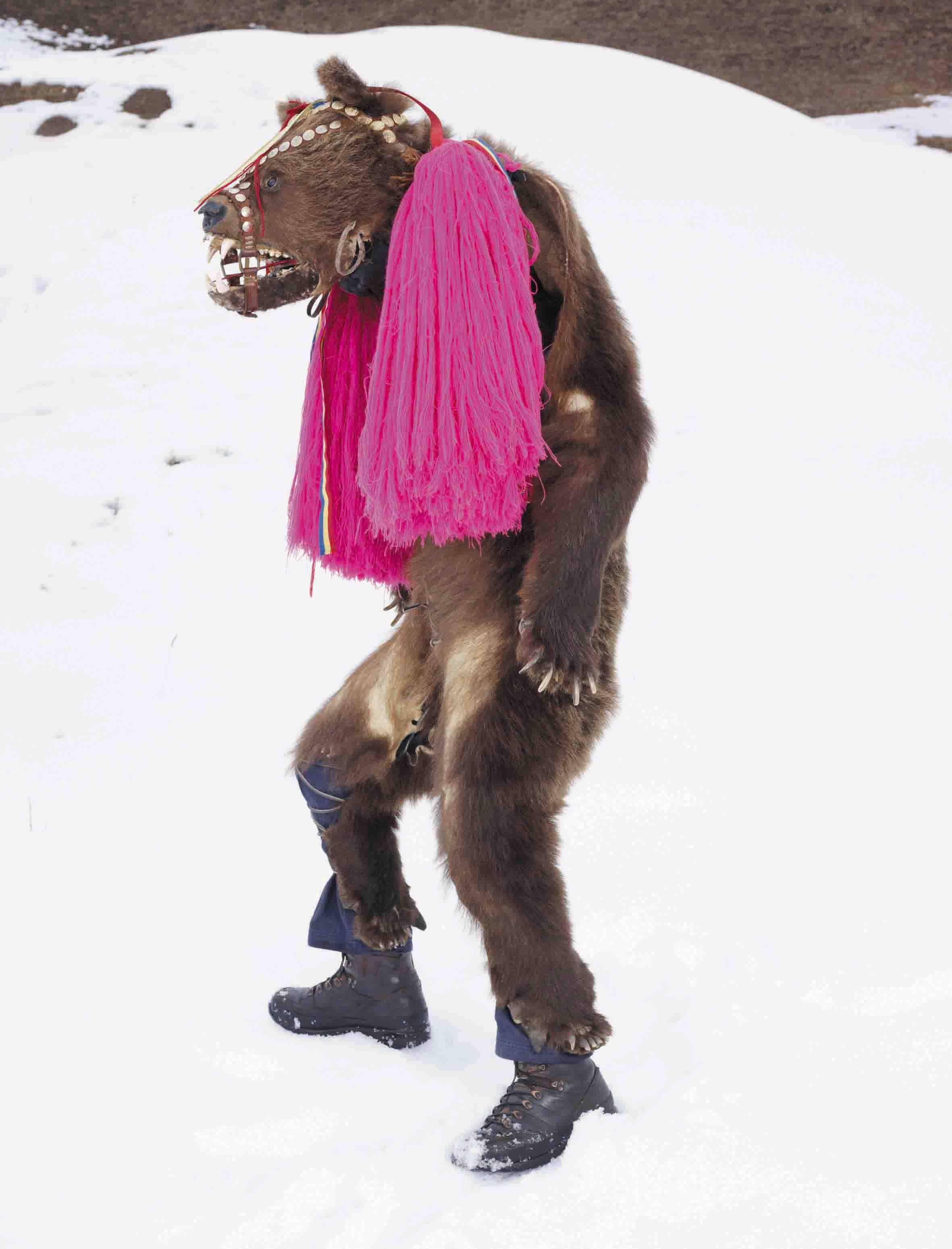 Ursul din Palanca, Romania, Serie WILDER MANN_CHARLES FREGER_2010-2011 (2)